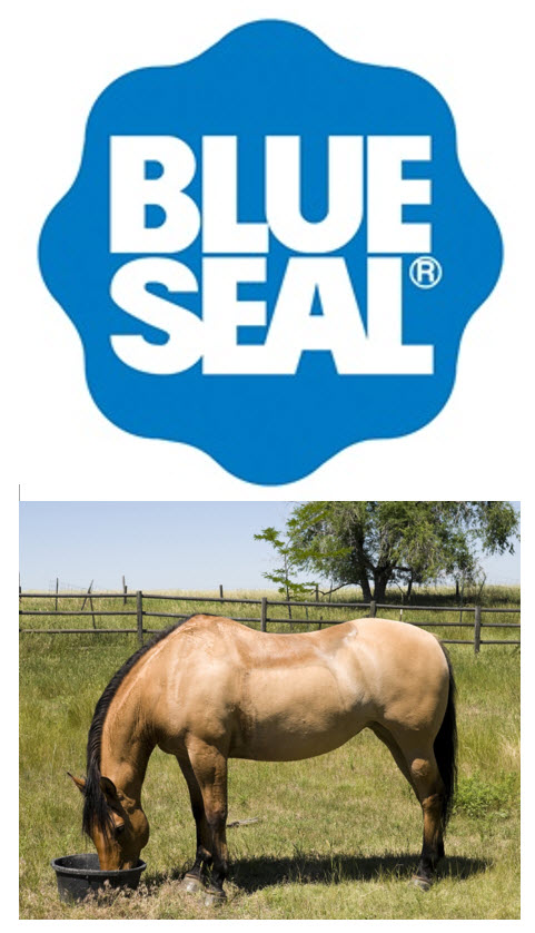 Logo Blue Seal